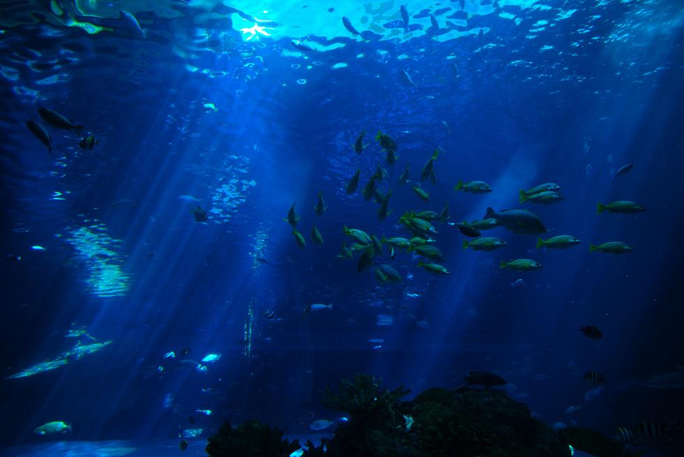 α Gri-X [アルファグリックス] (沖縄海洋深層水)-敦賀のメディカルエステ バレリアンのイメージ